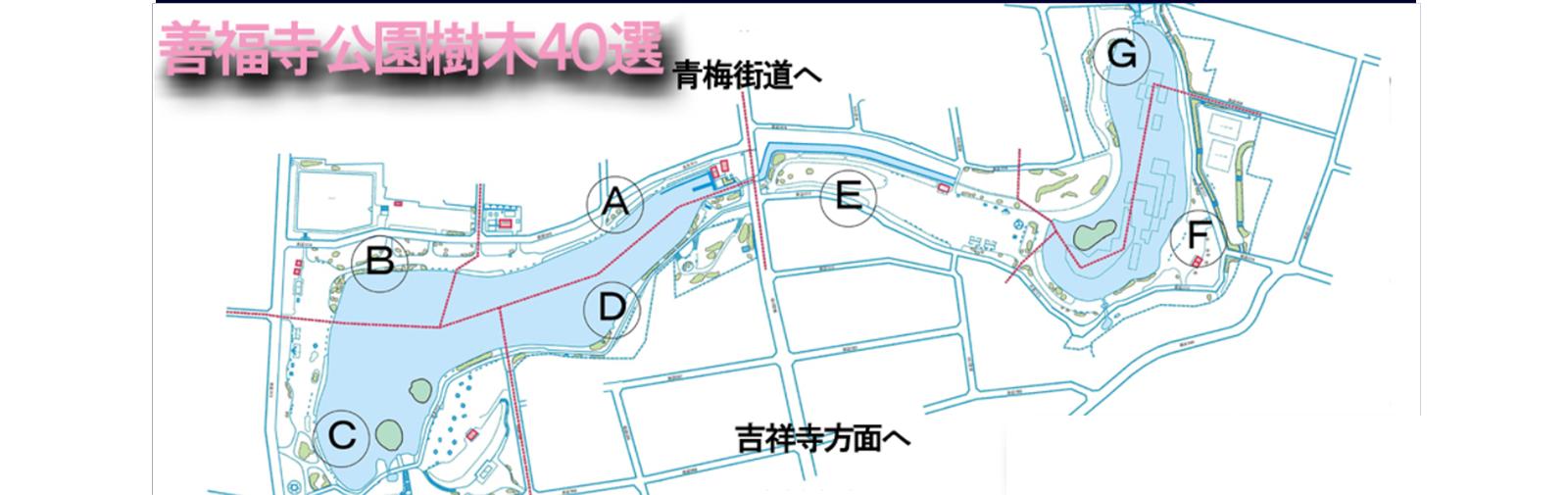 善福寺公園樹木40選